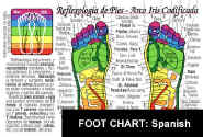 FOOT REFLEXOLOGY Chart- In SPANISH: